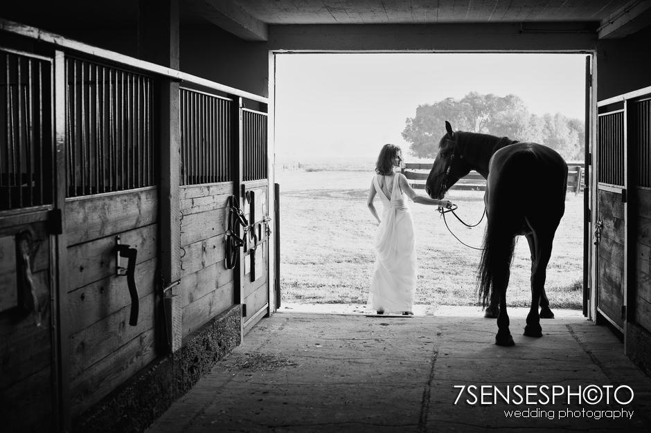 7sensesphoto sesja slubna plener konie 1