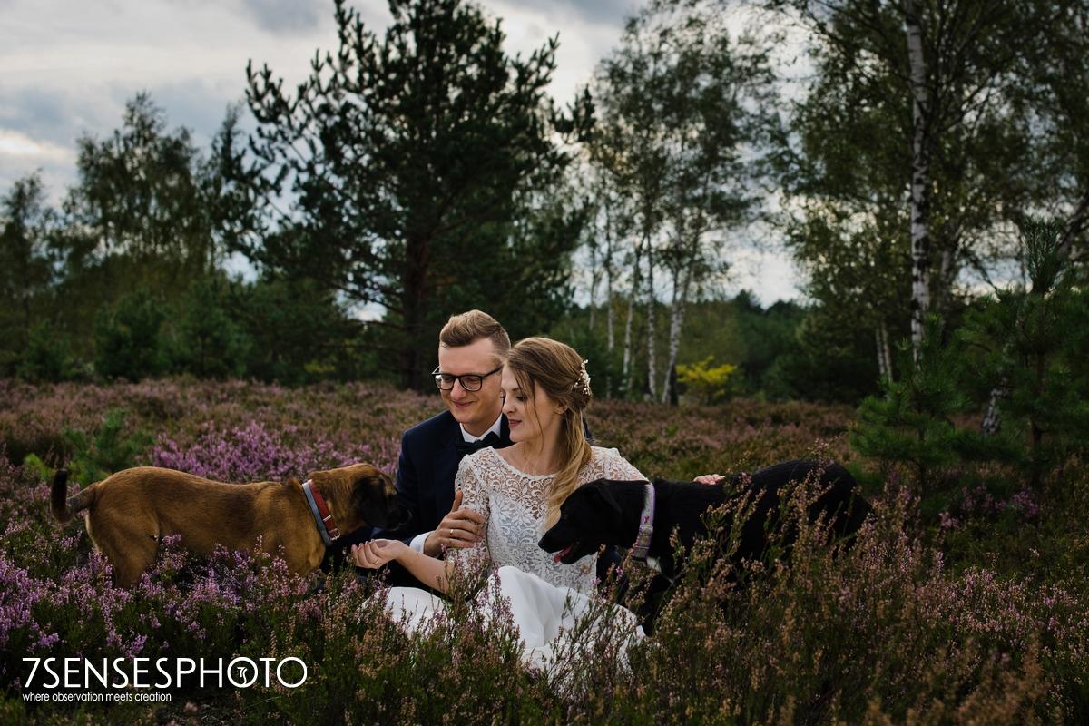 sesja ślubna wrzosowisko jesień